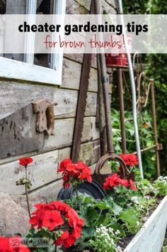 Cheater gardening tips for brown thumbs! By Funky Junk Interiors for ebay.com