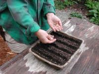 My Covered Bridge: Let's Talk Gardening
