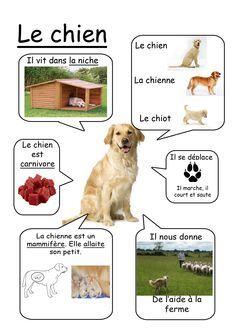 Chien - Animaux de la ferme #learnfrench http://www.uniquelanguages.com