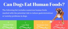 Do you feed your dog your food? A bite here? a nibble there? A whole meal of human food? Here's a list of human foods for dogs - the good and the bad...
