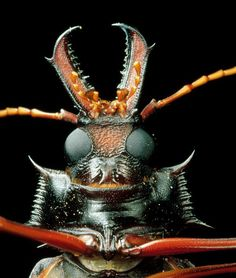 Under scanning electron microscope; Longhorn Beetle