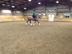 Flatwork progress with Louie | Training | Northumberland
