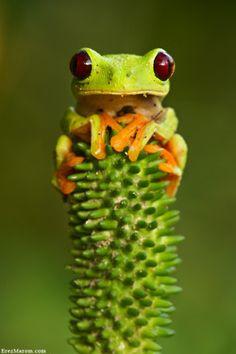 tree frog!!!