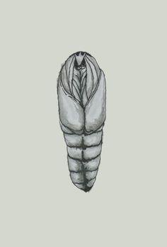 moth  #sketch, #illustration, #watercolor, #pen