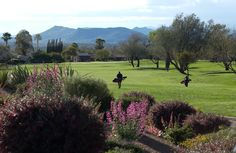 Rio Verde Golf, Arizona