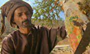 Globo Repórter - Beduíno mostra como é feita extração do melhor de incenso do mundo | globo.tv
