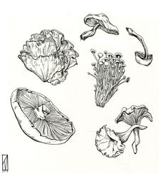 A collection of edible mushrooms! In the book I'm reading now someone suspiciously dies of eating poisoned ones. Mushroom Drawing, Mushroom Art, Art Journal Inspiration, Art Inspo, Cute Tattoos, Small Tattoos, Art Sketches, Art Drawings, Mushroom Tattoos