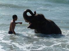 Mai Khao Beach is a popular place for tourists to meet elephants.  #Phuket, #Thailand.