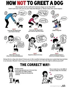 For us humans, it can sometimes be difficult to tell exactly WHAT you pup is saying. After all, dogs communicate much more with body language than we do! However, never fear, because these easy-to-read and adorable charts by doge illustrator and artist Lili Chin help translate pupspeak! So now, that side-eye they throw you? You'll …