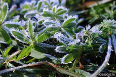 Frost Covered Plants – kaufen Sie dieses Foto und finden Sie ähnliche Bilder auf Adobe Stock | Adobe Stock Plants, Photography, Pictures, Photograph, Fotografie, Photoshoot, Plant, Planets, Fotografia