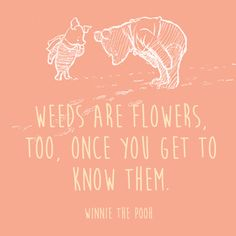 Weeds - Words of Wisdom from Winnie the Pooh - Photos