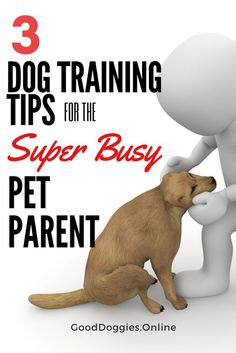 3 Dog training tips for the super busy