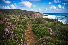 Australia.com The Margaret River Discovery Co - Wine & Adventure Tours | Margaret River, WA  It's that time of the year - the wildflowers are in bloom!