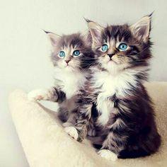 Cat cat cat♡