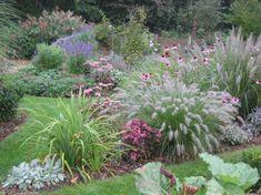 Grasses for the garden - Garten - Plants, Garden Borders, Ornamental Grasses, Garden Shrubs, Pagoda Garden, Grasses Garden, Garden Planning, Garden Landscaping, Cottage Garden