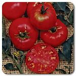 Organic Pruden�s Purple Tomato