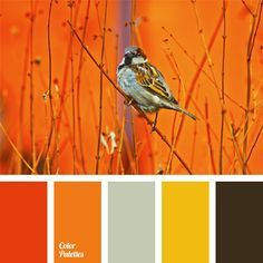 Gamma of juicy natural colors: yellow, orange and shade of Sicilian orange…