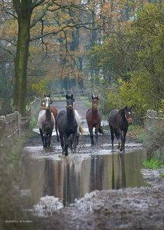 What a dreamy horse pic! Horses just walking down the creek.