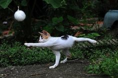 """When it comes to whooping some serious booty, cats are one of the most underrated animals on the planet. There's something so peaceful and cuddly about them that you never think twice about one serving up a plate of ass-whoop. This list proves that cats are the secret ninjas of the animal kingdom.Want more LOL pet videos? <a href=""""http://www.youtube.com/subscription_center?add_user=petsami"""" target=""""_blank"""">Subscribe to Petsami</a> Like us on <a href=""""http://facebook.com/petsami"""" target=""""_b"""