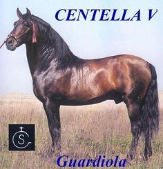 CENTELLA V - Campeón de Espaňa SICAB 1984