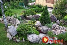 Chcete v záhrade skalku? 35 prekrásnych nápadov, ktoré určite oceníte! My Patio Design, Rock Garden Design, Railing Planters, Outdoor Plants, Outdoor Decor, Alpine Garden, Gravel Garden, Home Vegetable Garden, Yard Landscaping