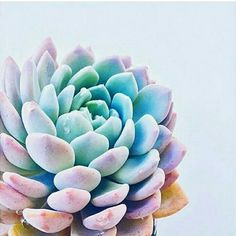 Succulent position and color inspiration.