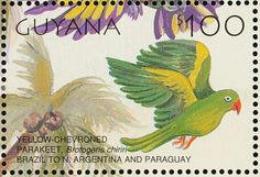 Yellow-chevroned Parakeet stamps - mainly images - gallery format