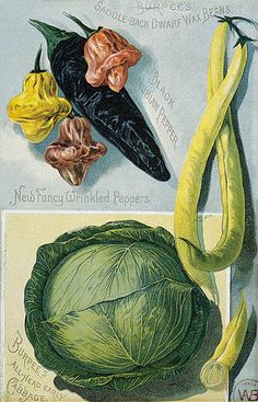 Burpee's 1891 catalogue page