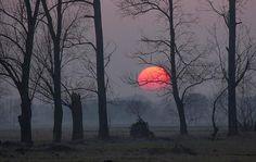 moon #fullmoon #forest #moon #teenwolf #nature #night #photography #sunset #outdoor #random #photooftheday