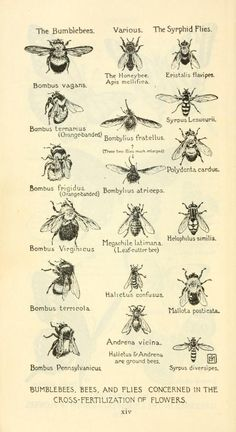 Field book of american wild flowers; being a short description of their character and habits, a concise definition of their colors, and incidental references to the insects which assist in their fertilization, by F. Skull Tatto, Old Encyclopedias, Petit Tattoo, History Tattoos, Kali Uchis, Bee Art, Save The Bees, Bees Knees, Queen Bees