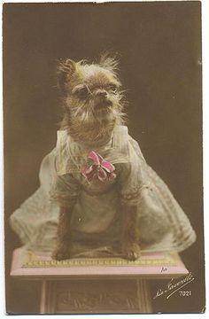 Vintage dog dressed up. Terrier.