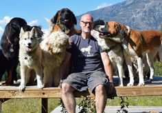 A Canadian couple named Mark and Sharon Starmer did something most people cannot do easily. They adopted as many as 46 Abandoned Dogs https://goo.gl/ZqE0a9