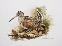 El pintor y la Naturaleza - Wildlife Art Elk Drawing, Grouse Hunting, Bird Artwork, Game Birds, Bird Illustration, Watercolor Bird, Wildlife Art, Animals And Pets, Drawings