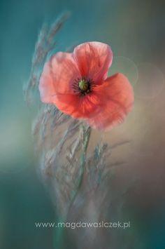 Dreamy..... by Magda Wasiczek, via 500px