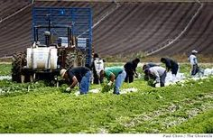 Farmworkers @Lakeside Organics, Watsonville, Ca