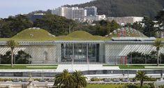 California Academy of Sciences in Golden Gate Park. Rainforest, planetarium, living roof, aquarium and Claude.
