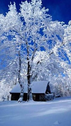 The beauty of winter. Bright blue winter sky reflecting off of bright white snow Winter Szenen, Winter Love, Winter Magic, Winter Christmas, Winter White, Winter Trees, Snowy Trees, Beautiful World, Beautiful Places