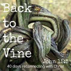 Back to the Vine {Lent Easter Scriptures, Bible Verses, Train Up A Child, 6 Train, Beside Still Waters, Printable Scripture, Christian Meditation, Proverbs 22, Scripture Reading