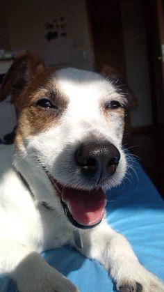 warm sunlight = happy dog
