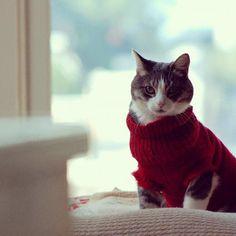 cat in a sweater <3