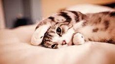 Um gatinho acabando de acordar.