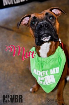 """Mia: """"I'm so excited to spend my days loving my furever family - Thanks, NWBR!"""""""