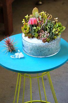 Succulent arrangement Succulent planter Succulent by DallaVita, $58.00