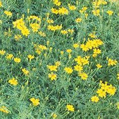Plant That Smells Like Cat Urine