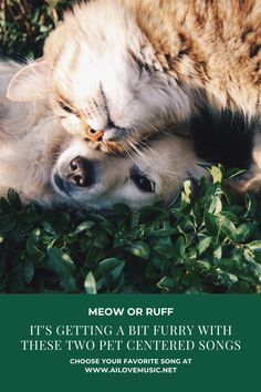 It's Getting a Bit Furry With These Two Pet Centered Songs - ai love music Love Your Pet, Your Dog, Calico Cat Names, The Lion Sleeps Tonight, The White Album, Pet Day, Pet Life, Cat Gifts, Animals And Pets