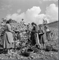 Restos de Colecção: Agricultura