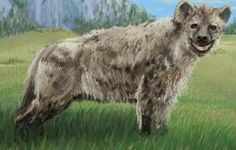 Malawi terror beast- African cryptid: an unidentified animal that killed 3 people by crushing their skulls and eating their intestines. it injured 16 others by tearing off ears, mouths, noses, arms, legs, and hands. it is thought to have been a rabid hyena, but locals said that its hind legs were too long. Cryptozoology, Hyena, Mouths, Mythical Creatures, Folklore, Dinosaurs, Animals And Pets, Skulls, Mythology