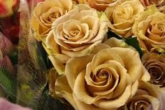 Gorgeous, soft combo roses