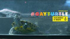 Amnesty International´s Gay Turtle Social Experiment - Turkey - Youtube