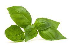 Basil - Produce Made Simple
